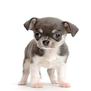puppytest met pup