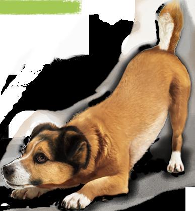 hond speelhouding